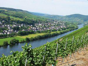 Blick auf Brauneberg