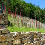 Ramsthaler Weinwanderwege