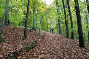 Waldweg am Walberla