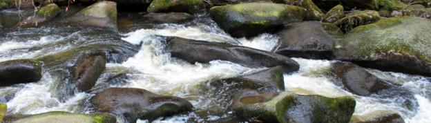 Waldnaabtal-Banner